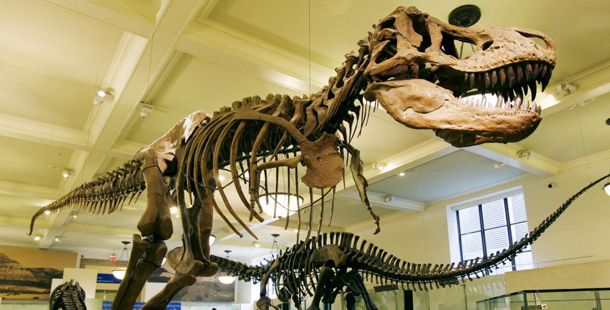 tyrannosaurus rex museum